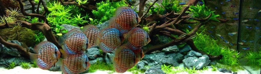 Aquariumpflanzen aquariumpflanzen direkt aus der for Aquarium pflanzen